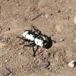 Beetles inspire engineering innovation at BAE Systems