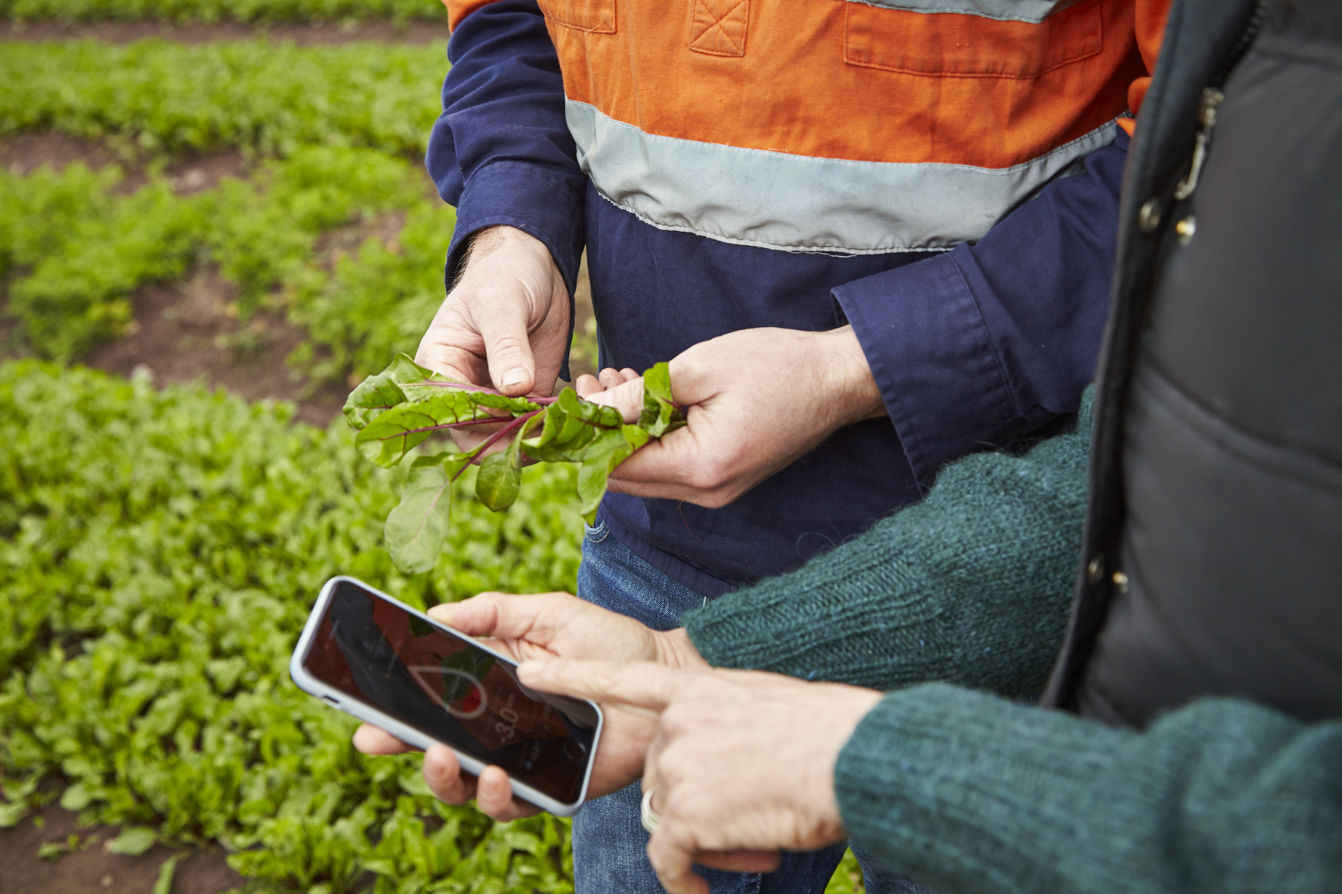 Image of the Yield's smartphone app being used on a farm