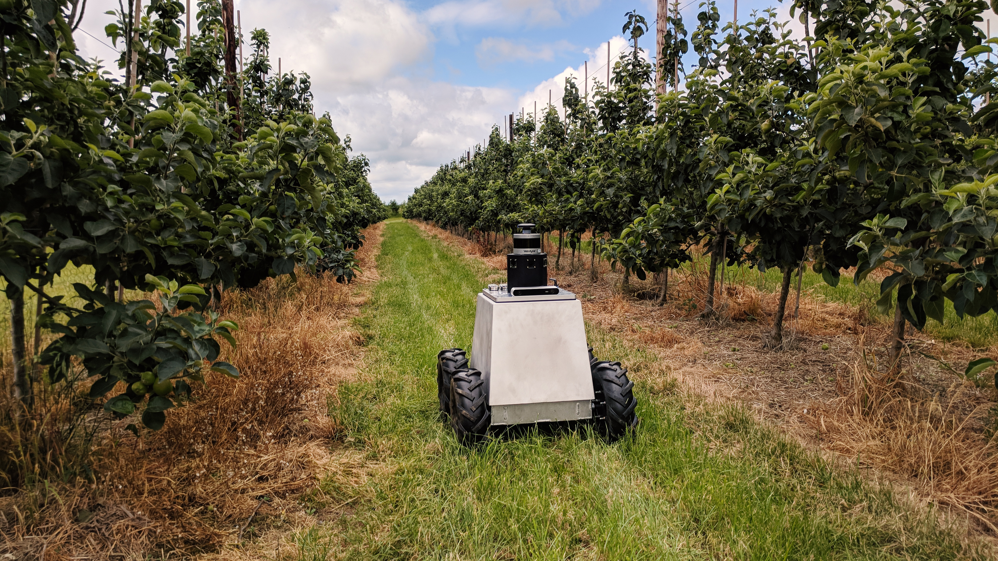 Medium distance photo of the Mamut robot travelling along a path between rows of tall crops demonstrating its use in agriculture