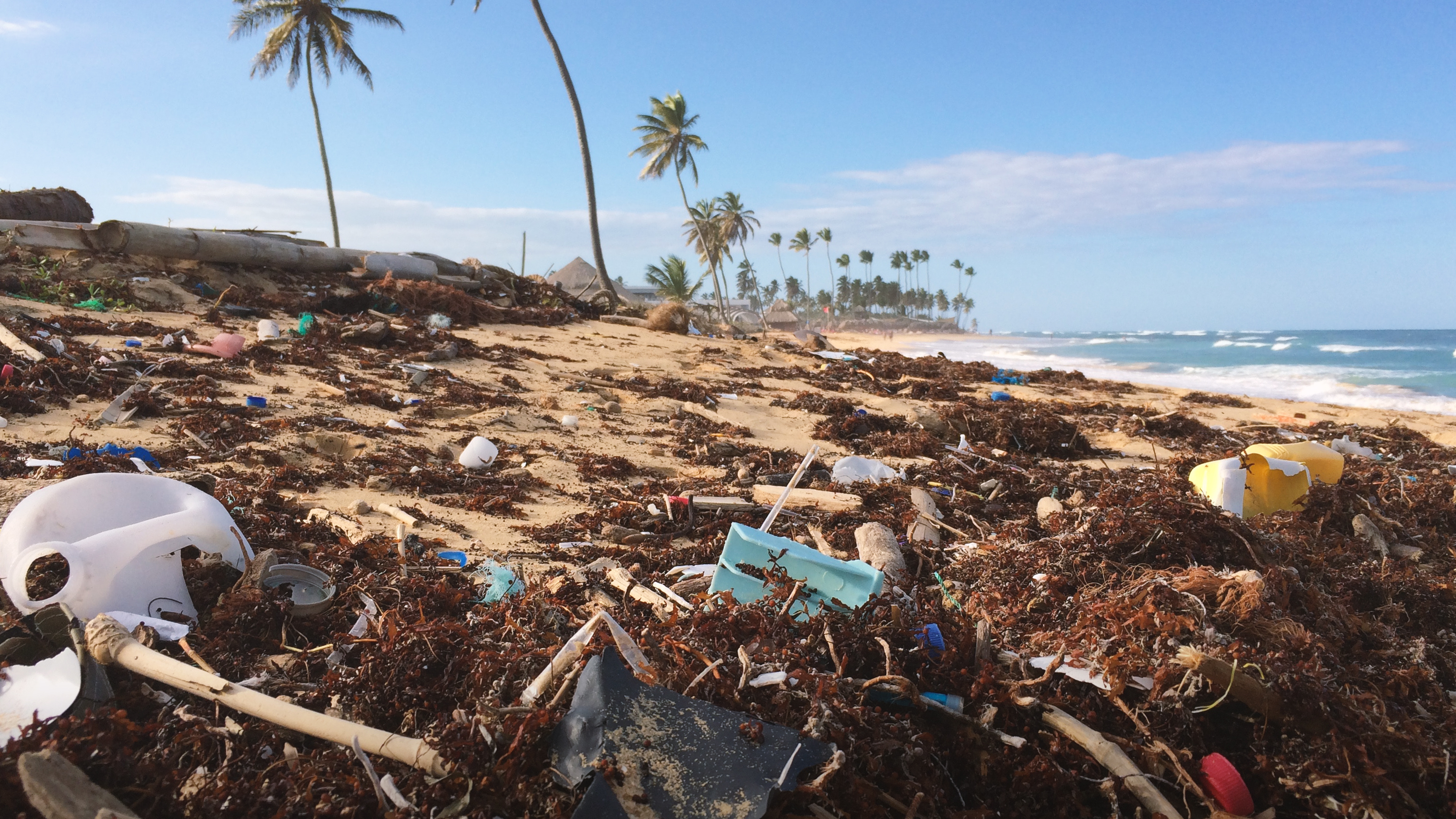 Image of a tropical beach with palm trees littered with seaweed and plastics.